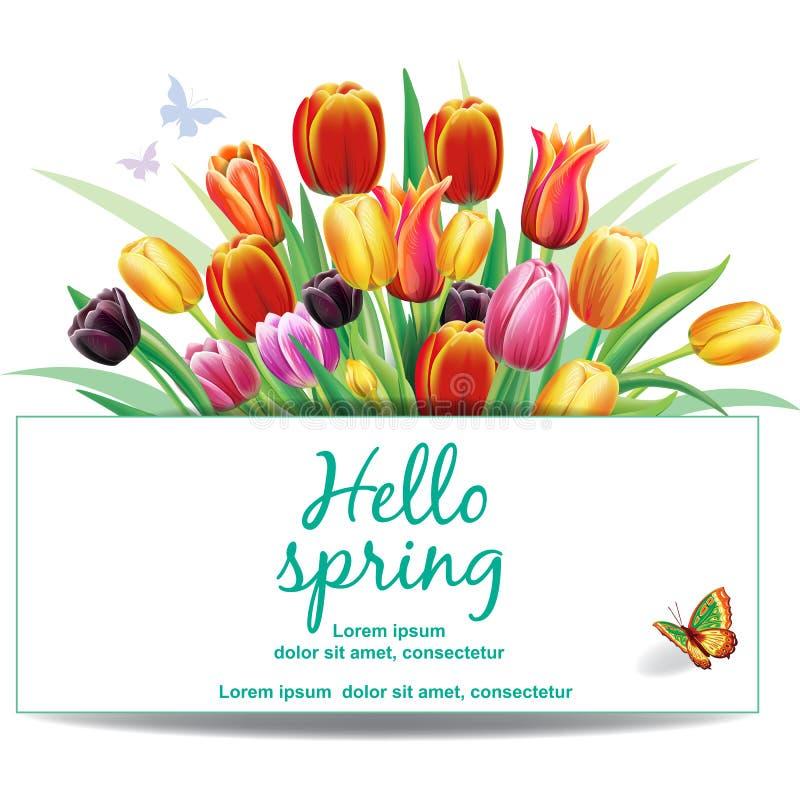 Расположение с multicolor цветками тюльпанов иллюстрация штока