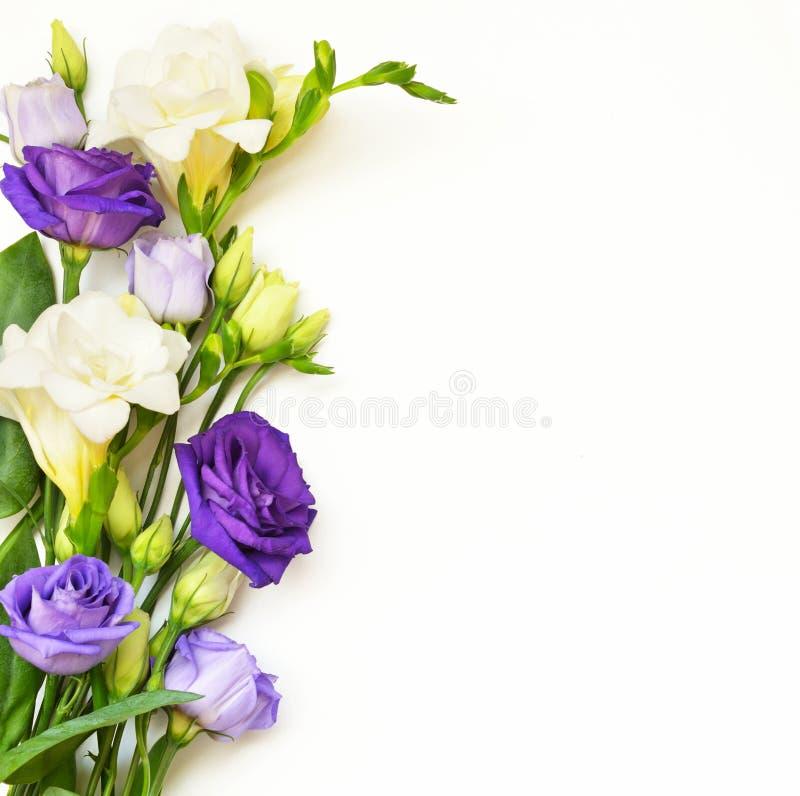 Расположение цветков на белой предпосылке стоковые фотографии rf