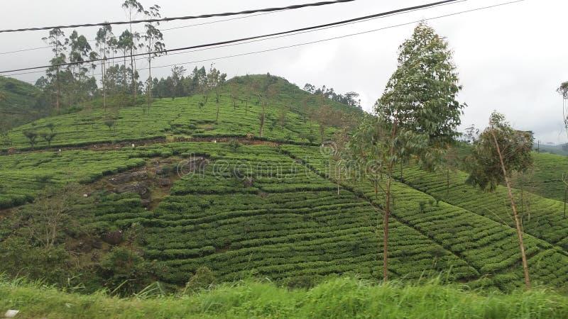 Расположенная в центре страны гора стоковые изображения rf