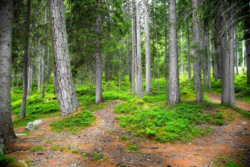 Распорядок в лесе стоковые фотографии rf