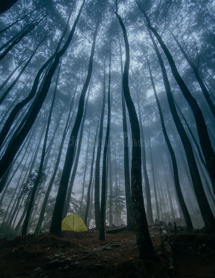 Располагаться лагерем на пуще сосенки стоковое изображение rf