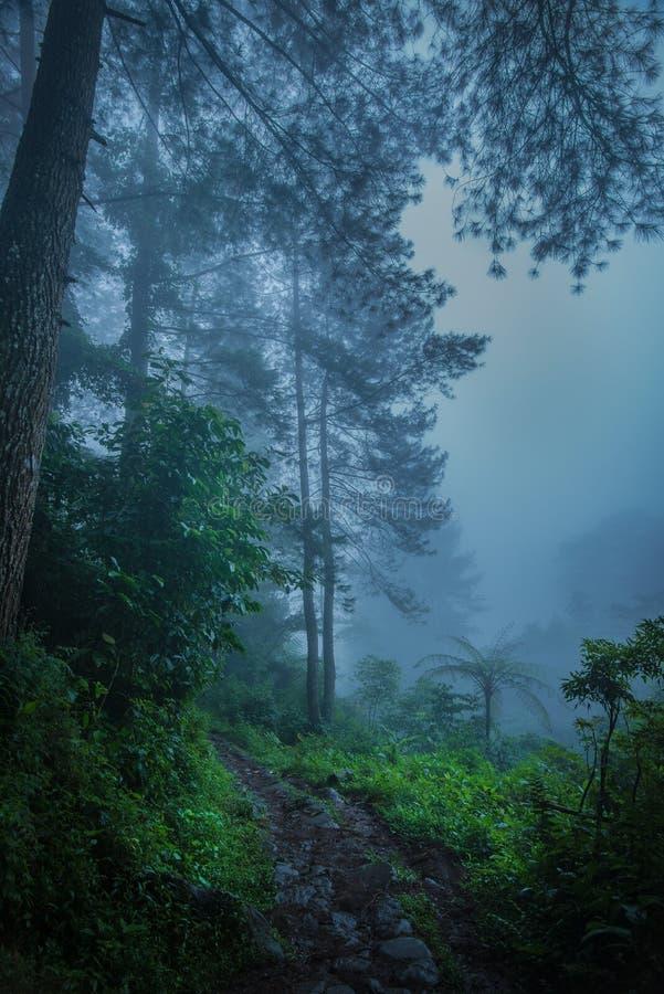 располагаться лагерем на тумане стоковые фотографии rf