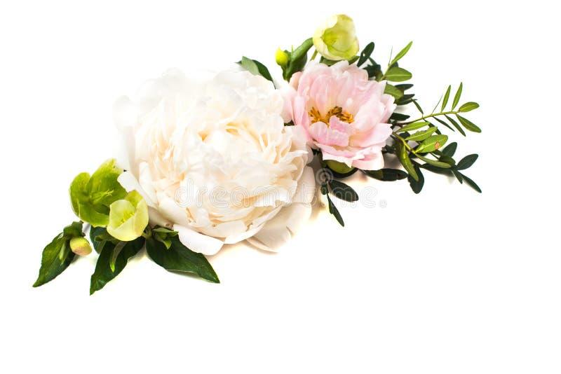 Расположение цветков пиона на белой изолированной предпосылке празднично стоковое изображение rf