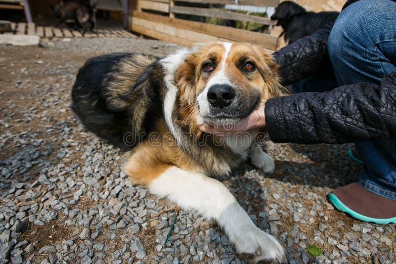 Распределение бездомных животных Бездомные собаки ждут их новые владельцев стоковое изображение rf