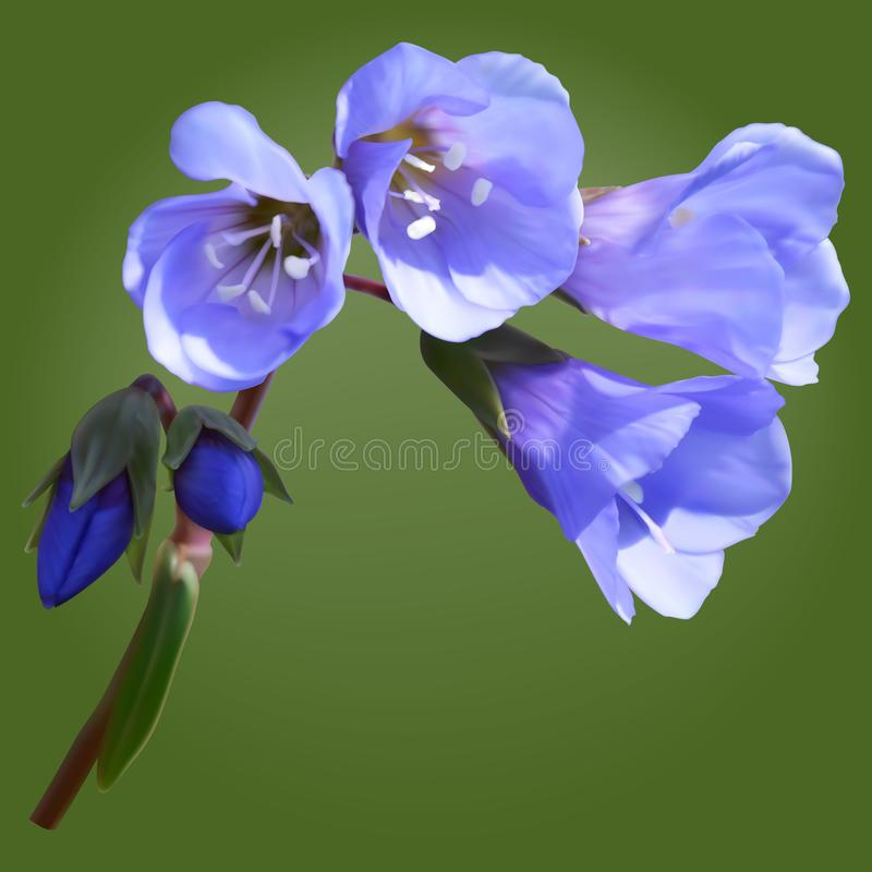 Распространяя цветки лестницы ` s Джейкоба иллюстрация штока