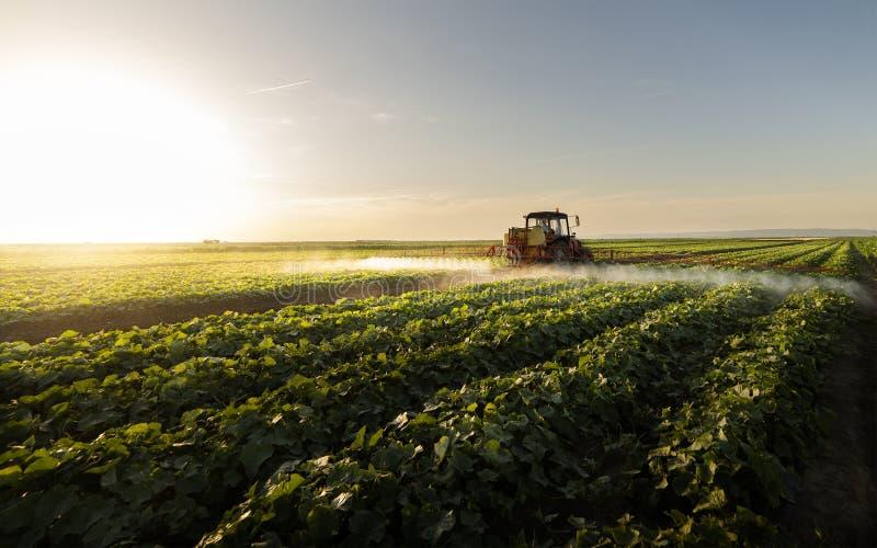 Распыление растительного поля трактора в закате стоковое изображение