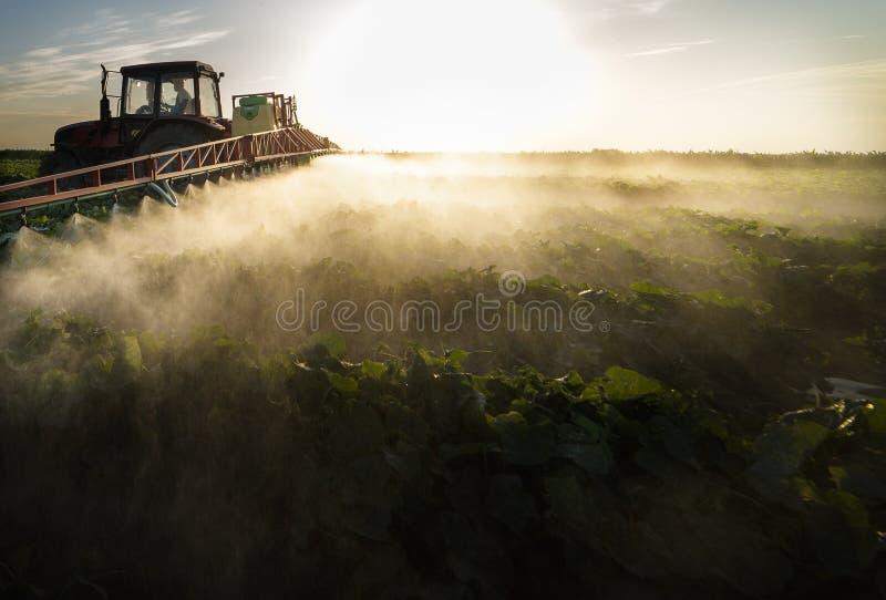 Распыление растительного поля трактора в закате стоковое изображение rf