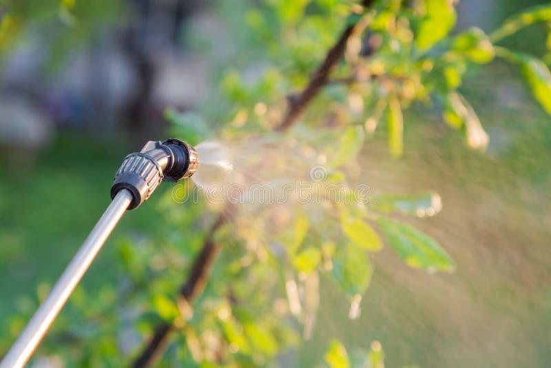 Распыляя деревья с пестицидами стоковые фото