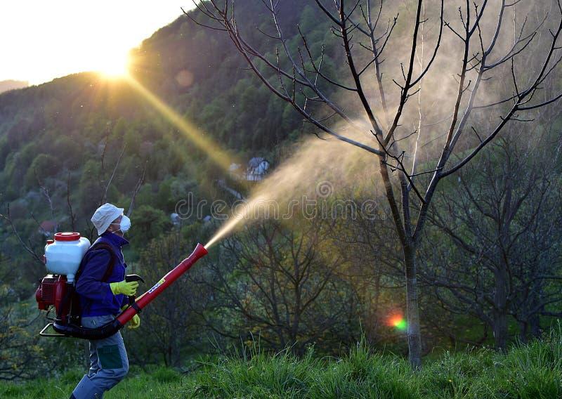 Download Распылять трущоб грецкого ореха Стоковое Изображение - изображение: 90522795