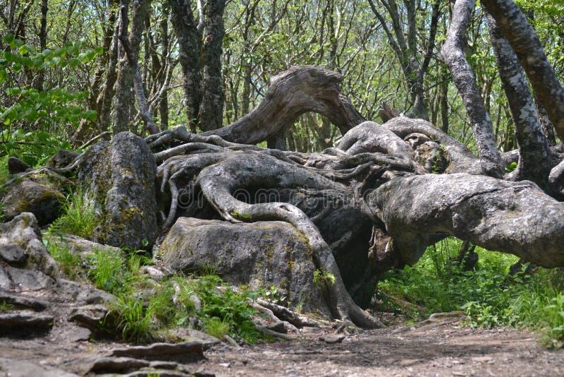 Расплавленное дерево стоковое фото