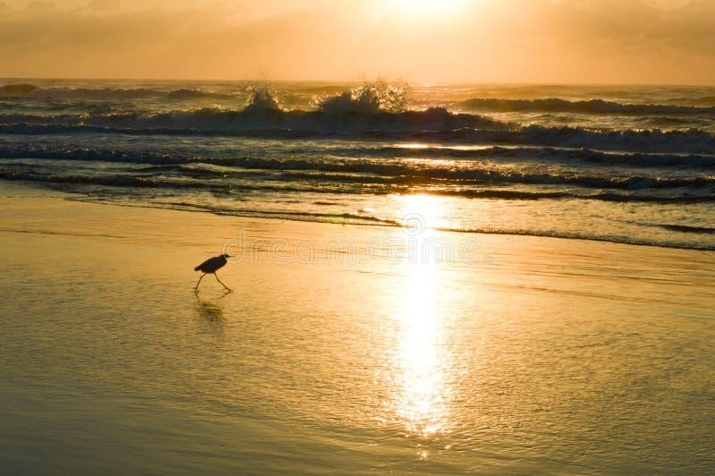 Рассветающ на пляже Torres, Бразилия стоковые изображения