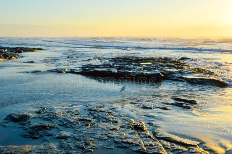 Рассветающ на пляже Torres, Бразилия стоковое фото