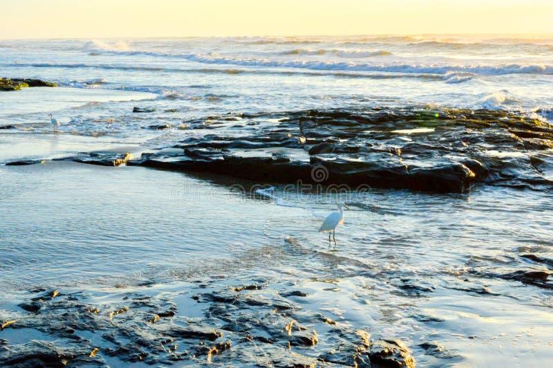 Рассветающ на пляже Torres, Бразилия стоковая фотография rf