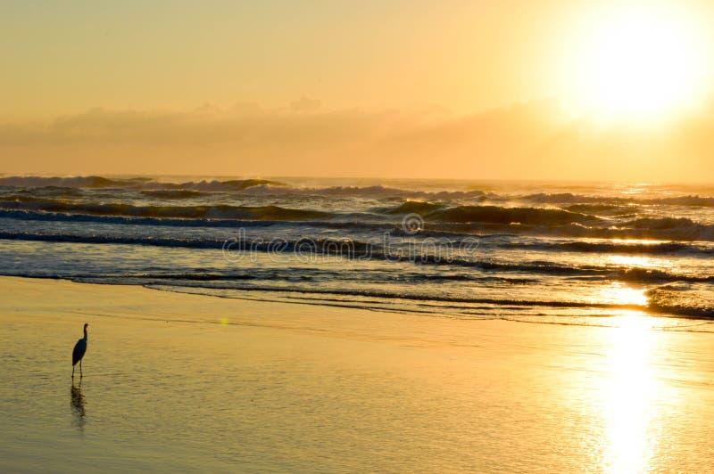 Рассветающ на пляже Torres, Бразилия стоковое изображение rf