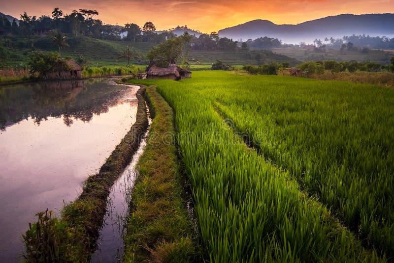 Рассвет в полях риса Бали, Индонезии стоковые фото