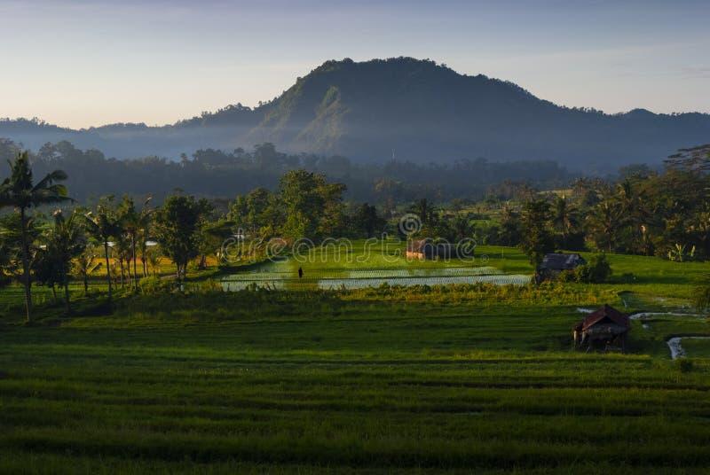 Рассвет в полях риса Бали, Индонезии стоковое фото rf