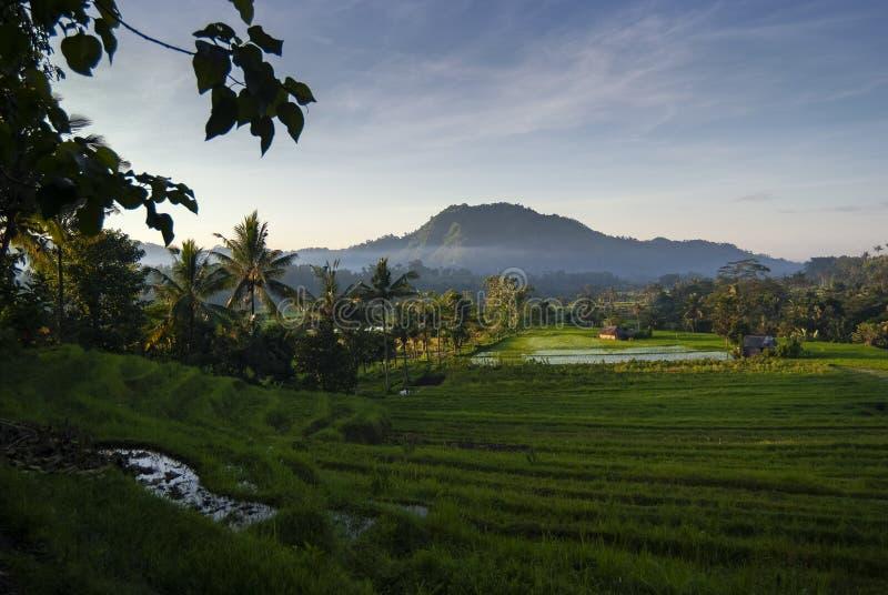 Рассвет в полях риса Бали, Индонезии стоковые изображения