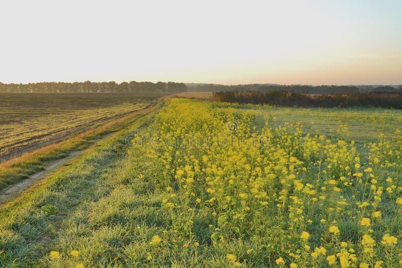 Рассвет в поле осени стоковые фото