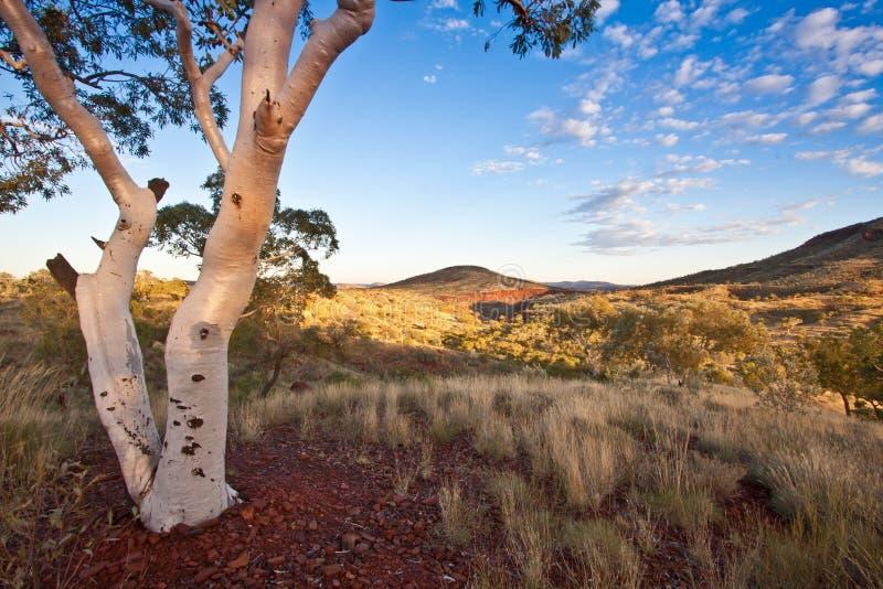 Рассвет в Pilbara стоковая фотография rf