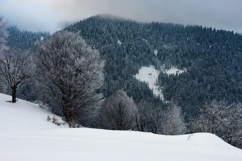 Рассвет зимы в сельской местности стоковое изображение