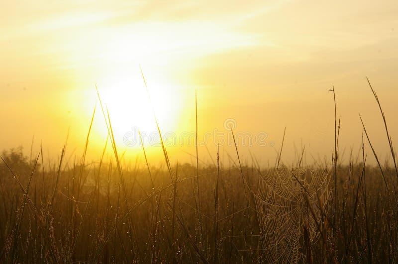 рассвет паутин стоковое изображение
