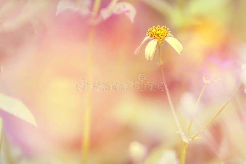 Рассвет свежего воздуха и красота цветов на фоне Доброе утро стоковое изображение