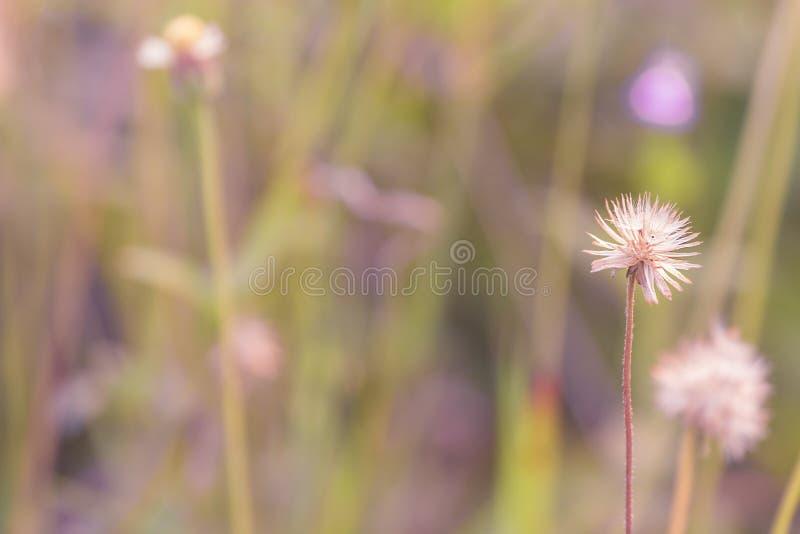 Рассвет свежего воздуха и красота цветов на фоне Доброе утро стоковая фотография