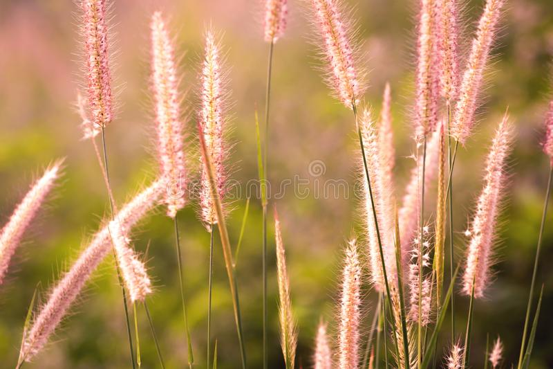 Рассвет свежего воздуха и красота цветов на фоне Доброе утро стоковая фотография rf