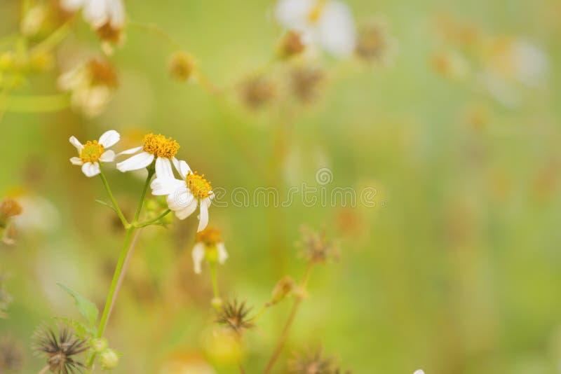 Рассвет свежего воздуха и красота цветов на фоне Доброе утро стоковые фотографии rf