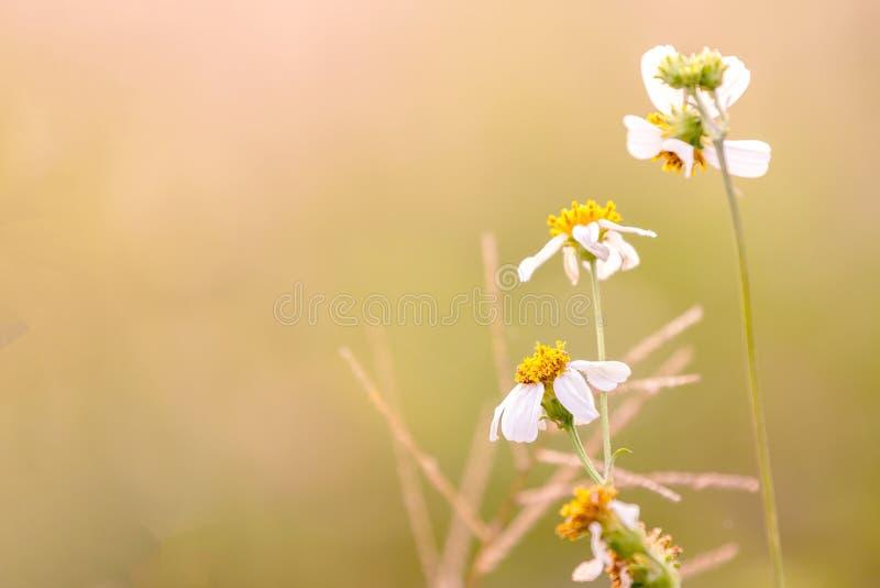 Рассвет свежего воздуха и красота цветов на фоне Доброе утро стоковые изображения rf
