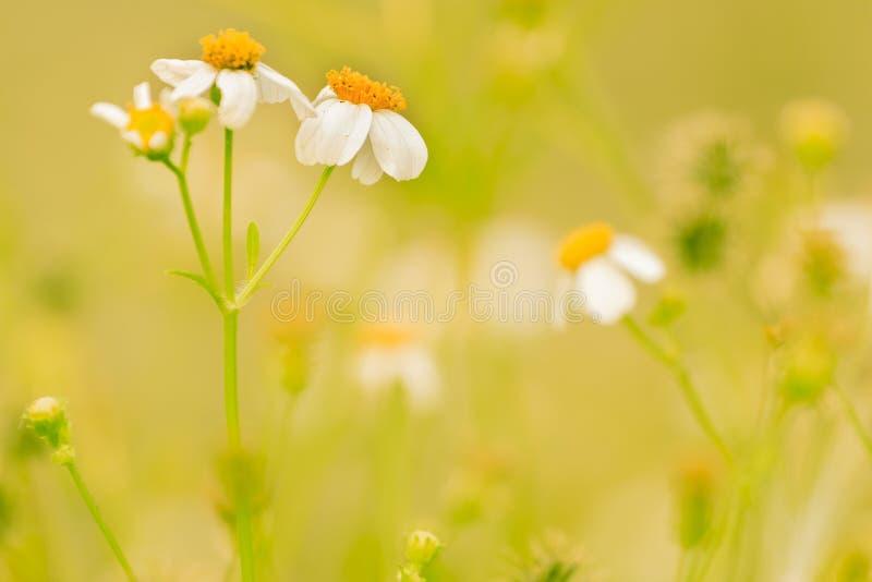Рассвет свежего воздуха и красота цветов на фоне Доброе утро стоковые изображения