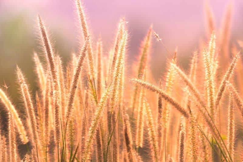 Рассвет свежего воздуха и красота цветов на фоне Доброе утро стоковое фото rf