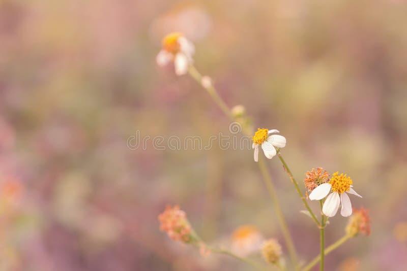 Рассвет свежего воздуха и красота цветов на фоне Доброе утро стоковое фото
