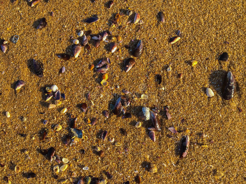 Рассвет, Macae - случайные seashells на песке стоковые изображения rf