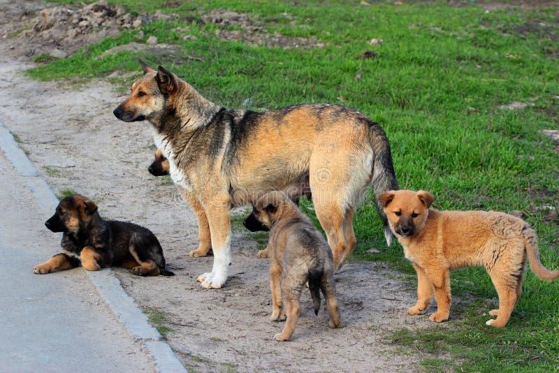 Рассеянная женская собака с щенятами стоковое изображение rf