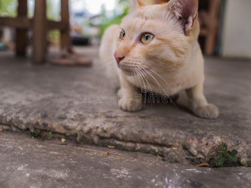 Рассеянная зазубрина головы кота заискивая стоковые фотографии rf