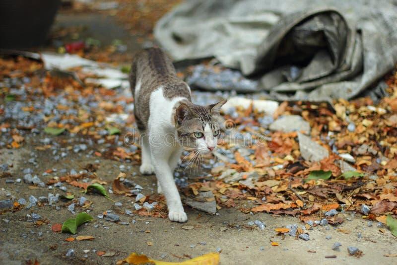 Рассеянная прогулка кота прочь на поле стоковая фотография
