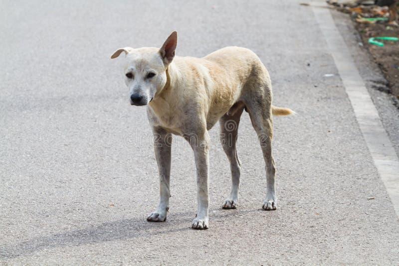 Download Рассеянная собака стоковое фото. изображение насчитывающей сиротливо - 40591108