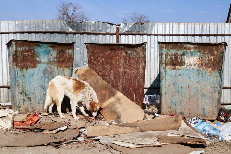 Рассеянная собака стоковое фото rf