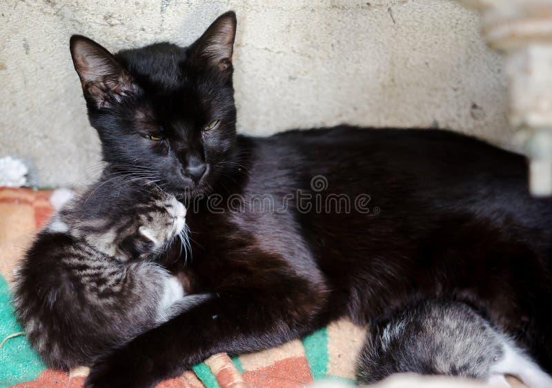 Рассеянные защитные мама и котята кота стоковые изображения
