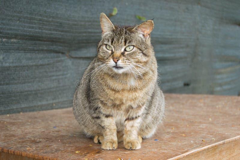 Рассеянный кот в предместье Флоренса стоковая фотография