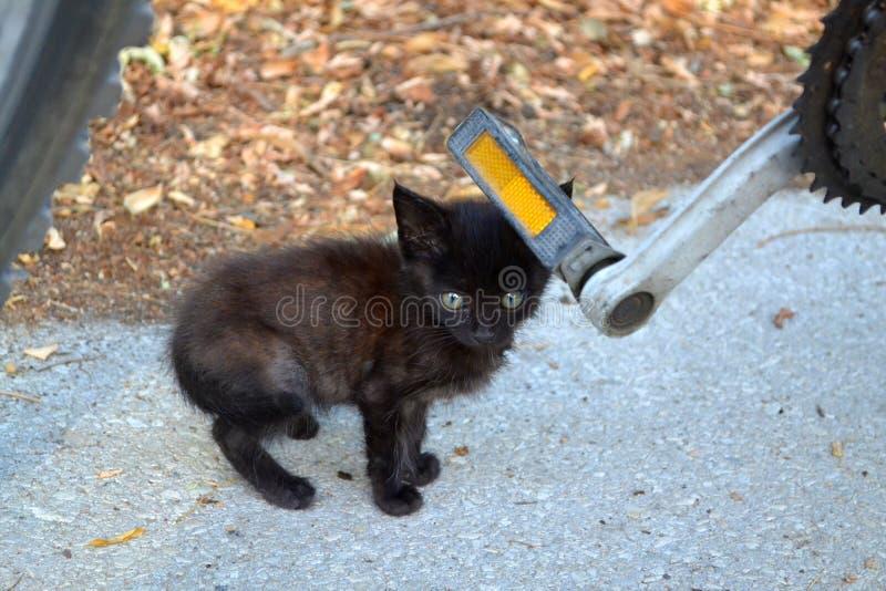 Рассеянный черный котенок на улице стоковое изображение rf