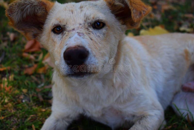 Рассеянный doggy стоковые фото