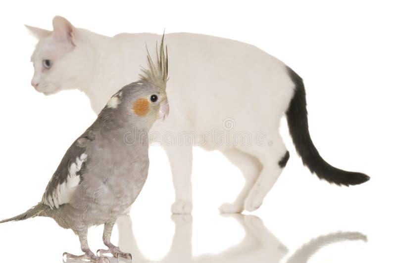 рассказ кота птицы стоковое изображение rf