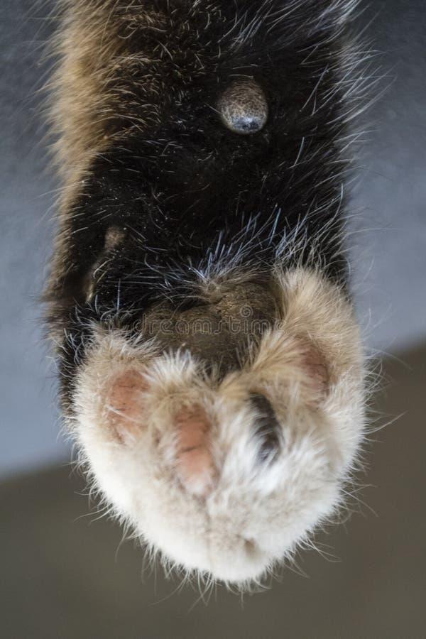 Расслабленное милое, striped и кот спать стоковые изображения rf