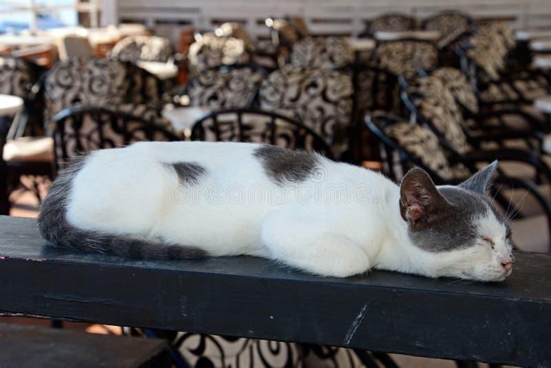 Расслабленный серый и белый кот, Крит стоковое фото rf