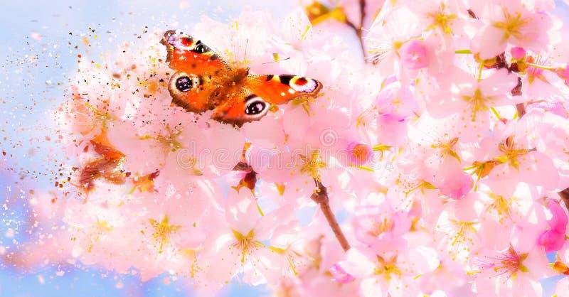 Растворяя текстура солнечного вишневого цвета весной с красной бабочкой на нежных цветках стоковое фото