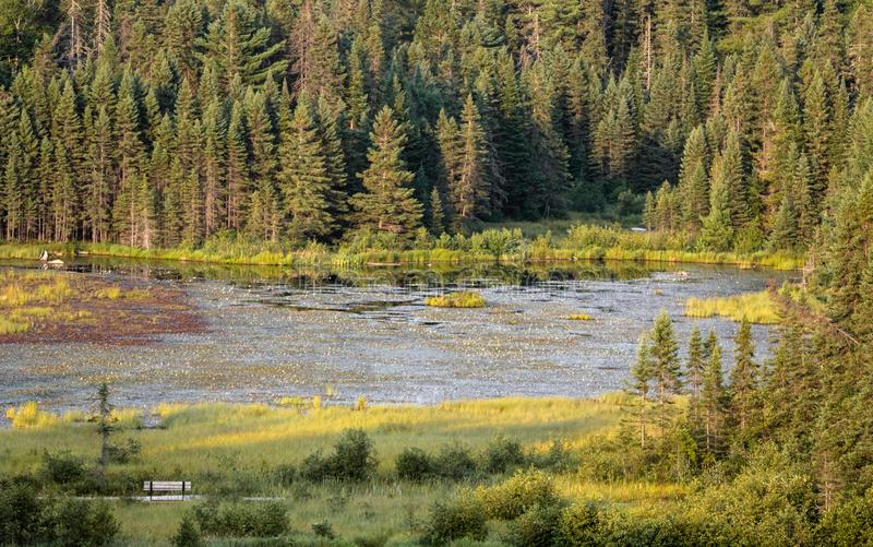 Растительность пруда бобра стоковые изображения