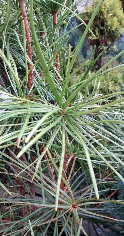 Растительные иглы шиповые шипы макрос закрытия стоковое фото