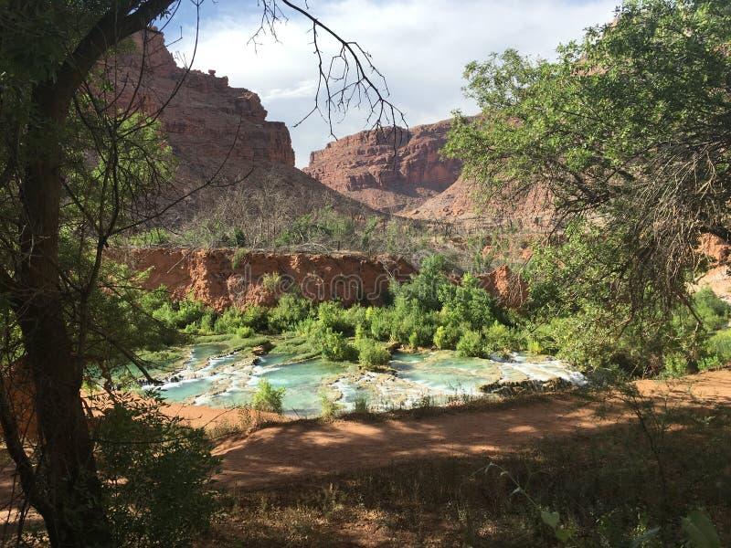 Растительность гранд-каньона стоковые фото